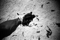 LCA+Summer (BigClownshoes) Tags: summer blackandwhite yard lca lomography d76 toad bufo aristapremium