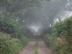 Lane (burnsmeisterj) Tags: trees mist olympus lane omd em1