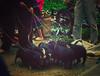 IMGP9358 (crazyycat.0209) Tags: hagiang ethnicmarket dongvan weeklymarket hàgiang chợphiên đồngvăn dântộcthiểusố trẻemvùngcao chợphiênđồngvăn dongvanethnicmarket fivecolorstickyrice