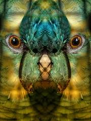 last in the pecking order (pete ware) Tags: bird photoshop fun mirror eyes beak feathers parrot charlie nik myfirstdslr 6megapixels nikond40 cagebars peteware xbeaknotxbox