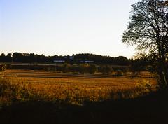 20151010-DSC_6722 (sarajoelsson) Tags: color mamiya film rural mediumformat evening 645 sweden slidefilm september velvia slides fujichrome summerhouse goldenhour latesummer diafilm filmphotography mamiya645protl 80mmf19 lohärad mellanformat digitizedwithdslr