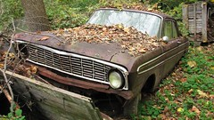 RUSTY '64 FORD FALCON (richie 59) Tags: autumn usa ny newyork fall ford overgrown leaves car america sedan outside us weeds junk rust unitedstates weekend sunday rusty hoarding vehicles faded crap rusted shit falcon hoard newyorkstate autos oldcar automobiles nys oldford nystate dutchesscounty abandonedcar hudsonvalley fomoco abandonedproperty fordfalcon 2door americancar 2015 rustedout motorvehicles fadedpaint junkcar twodoor uscar midhudsonvalley fordmotorcompany 2doorsedan dutchesscountyny marooncar midhudson fordsedan twodoorsedan abandonedvehicles 1964ford 1964fordfalcon junktrucks 1964falcon 1960scar 2010s rustyford oldsedan junkvehicles richie59 townofwappinger nov2015 townofwappingerny nov12015
