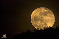 GRANDISSIMA (Lace1952) Tags: luna lunapiena controluce profilo alberi montagna ossola vco piemonte italia nikond7100 nikkor400mmf28