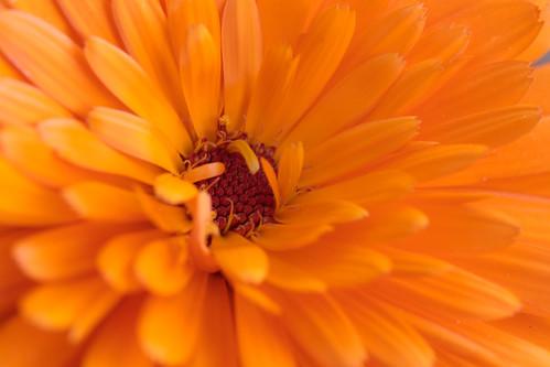 Full Frame Blooming