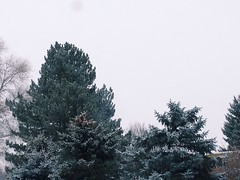 Its here (emeraldperez) Tags: winter sky snow cold clouds dark utah snowstorm iphone vsco