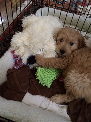 honey-and-cjs-little-girl-presley-loves-her-new-cuddle-buddy_18880027751_o