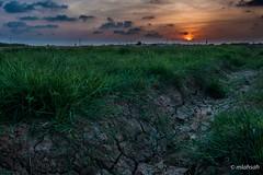 Sunset (mlahsah) Tags: sunset grass clouds landscape nikon farm ngc ksa farmlife غروب jazan السعودية مزرعة سحاب سحب عشب مزارع nikond90 sabya جازان صبيا