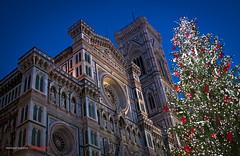 DUOMO DI FIRENZE (justpedalhard) Tags: christmas italia christmastree christmaslights duomoflorence ef2470f28l duomodifirenze canon50d italyindecember christmasitaly 2010michaellogatoc