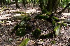 Mawphlang Sacred Grove2 (Hrishi the experimentor) Tags: india kings sacred northeast throne groves chiefs monoliths meghalaya khasi mawphlang