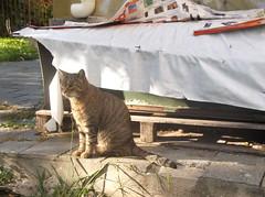 alfio, gatto savonese dalle belle zampette, vi consiglia (en-ri) Tags: cat colonia fujifilm miao randagio gatto felina savona tigrato