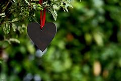 Dance Me to the End of Love... (eleni m) Tags: heart ribbon tree salix japanswilgje outdoor garden song leonardcohen droplet druppel bokeh hedge dof green black red hartje lint tuin