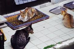 Today's Cat@2016-10-10 (masatsu) Tags: cat thebiggestgroupwithonlycats catspotting pentax mx1