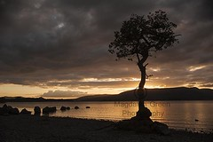 Sunset Glow over Loch Lomond at Milarrochy Bay  - Scotland (Magdalen Green Photography) Tags: sunsetglow lochlomond milarrochybay scotland scottish tree gorgeous pretty magdalengreenphotography 3493