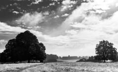 Petworth House Mono (worthing.alan) Tags: petworth park petworthhouse sussex nationaltrust mono blackwhite landsape