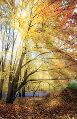Spacerek (dRvECtoR) Tags: jesie kudowa zdrój zdroj canon 6d venus laowa wide angle macro 15mm landscape autumn colors kolory jesieni forest las