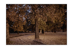 Night Walk in the Park (Terry L. Olsen) Tags: park fortsmith night lightroomcc ononesoftware