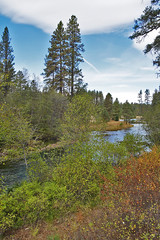 mh1290236headwaters (thom52) Tags: metoliusriver wizard falls fish hatchery bend or oregon