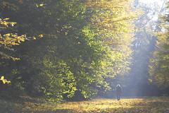 Autumn Light (CoolMcFlash) Tags: autumn light trees forest schnbrunn vienna austria person walking rays sunlight nature canon eos 60d herbst laub leaves licht sonnenlicht bume baum wald wien sterreich gehen sonnenstrahlen natur fotografie photography alone alleine fall