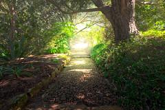 To The Other Side (Peter Weckesser) Tags: africa hss slidersunday southafrica kirstenboschgarden hope nature capetown kirstenboschgardens
