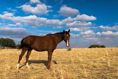 Tornado Horse (Juaberna) Tags: caballo horse landscape clouds nubes sky cielo campo
