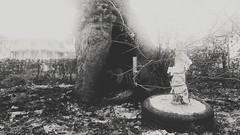 come out wherever you are (georgioskarataglidis) Tags: tree bw hollow greece editing treeoflife outdoor leptokarya daythatnevercomes
