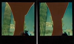 saguaro film fail x 2 (EllenJo) Tags: roidweek polaroidweek 2016 sx70 impossibleproject theimpossibleproject arizona az ellenjo ellenjoroberts polaroid instantfilm october19