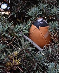 (Casey Lombardo) Tags: longbeach longbeachca streetphotography football footballs foundobject foundobjects found bush shrubs shrubbery