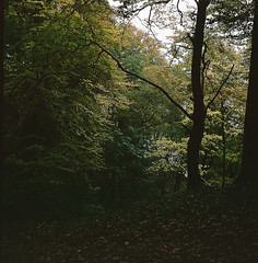 forest01 (DidaK) Tags: germany forest rugen trees mediumformat colorfilm prora400 120film