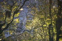 Speil av host (Lisbeth Pettersen) Tags: elv speilinger vann høst autumn reflections speiling river forest skog blader trær