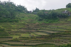 Hungduan, Rice Terraces, Cordilleras, Ifugao, Northern Luzon, Philippines (ARNAUD_Z_VOYAGE) Tags: islands island philippines landscape boat sea southeast asia city people volcano amazing asian moutains sunset street action cars jeepney tricycle architecture river tourist capital town municipality baguio northern luzon filipino filipina colors building house provincial province village batad rice terraces cordilleras ifugao unesco world heritage altitude mountain mountains field