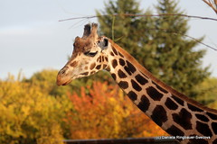a day at the zoo (joeyofchampsrunners) Tags: tiergartenschnbrunn tiergarten schnbrunn schlossschnbrunn animals zoo oldestzoointheworld