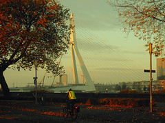Late autumn in Rotterdam (STEHOUWER AND RECIO) Tags: autumn bicycle fiets erasmusbrug erasmusbridge colours tones candid street netherlands tree trees leaf man person transport leaves crossprocessing film sunrise light view city cityview yellow brown red euromast straat road lights scene scenery cityscape lines shadows signs traffic transportation zuid atmosphere mood morning early one tram clouds sky building buildings attraction tourism bridge brug nostalgic photo image photography