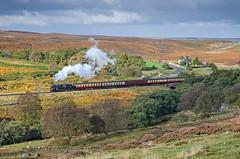 A Moors Morning. (DWH284) Tags: northyorkmoorsrailway nymr moorgates brclass4mt 76084 steamtrain heritagerailway bracken