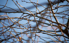 Herbst (wpt1967) Tags: castroprauxel eos6d erinpark herbst ruhrgebiet ruhrpott zweige autumn fall wpt1967