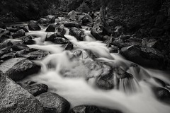 earth and water... (Alvin Harp) Tags: littlecottonwoodcanyon utah foreststream stream longexposure le july 2016 naturesbeauty bw blackandwhite monochrome sonyilce7rm2 teamsony fe24240mm alvinharp