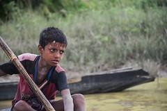 Determined () Tags:    nikond5300 nikon   swampforest  ratargul sylhet bangladesh