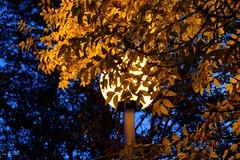 Lumière du soir (jpto_55) Tags: nuit feuille feuillage automne xe1 fuji fujifilm fujixf1855mmf284r hautegaronne france jaune