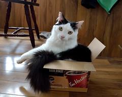 J'aime cette boite (pascal_roussy) Tags: chat cat animals animaux boite