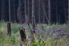 ckuchem-3561 (christine_kuchem) Tags: abholzung baum bienenweide blumen bäume fingerhut holzwirtschaft laubwald lichtung pflanzen spontanvegetation vegetation wald waldlichtung wildblumen wildpflanze wild