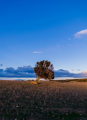 Tree on a Rectangle (Athrandel) Tags: land landscape landscapes nature green tree trees sky skies cloud clouds infra infrared ir colour colours colors colorful dramatic mood field fields