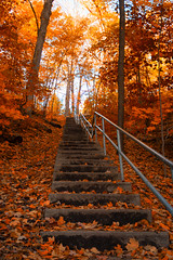 To The Sun (A Great Capture) Tags: agreatcapture agc wwwagreatcapturecom adjm ash2276 ashleylduffus ald mobilejay jamesmitchell toronto on ontario canada canadian photographer northamerica fall autumn automne herbst 2016 torontoexplore colours colors light sun sunny sunshine cityscape urbanscape eos digital natur nature naturaleza natura woods leaves leaf foliage autumnleaves stairs steps tree trees