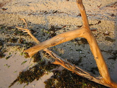 WOOD ON BEACH (PINOY PHOTOGRAPHER) Tags: matnog sorsogon bicol bicolandia luzon wood philippines asia world