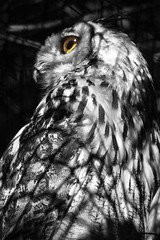 Lonely Owl (Joey Mitchell 18) Tags: trip family summer holland tree cute bird eye net nature beautiful dutch face look animal way out outside zoo trapped eyes rotterdam looking heart no wildlife beak cage special vision caged thinking twig looks lovely trap netted sunnyday honour