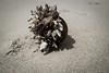 Auswahl-5378 (wolfgangp_vienna) Tags: old beach strand thailand island asia asien alt insel ko flotsam trat kut treibgut kood aophrao kokood schwemmgut kokut kohkut thesunshineresort