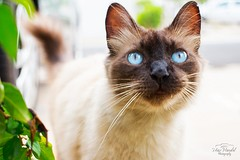 IMG_M5625 (Max Hendel) Tags: cat photography gato felino streetcat felie bichano animaldeestimao beautifulcat animaldomstico canoneosdigital photobymaxhendel bymaxhendel photographedformaxhendel fotografadopormaxhendel maxhendel photographedbymaxhendel pormaxhendel canoneosphoto photographermaxhendel maxhendelphotography
