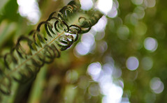 Light in the Forest (sphaisell) Tags: light macro leaves ecuador bokeh loscedros