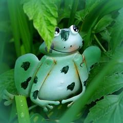 leapin' garden whimsy! (milomingo) Tags: green metal closeup garden square whimsy painted decoration amphibian frog ornament yardart cartoonish gardenart cmwd cmwdgreen