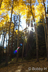 September 27, 2015 - Scenes of gold in RMNP. (Bobby H)