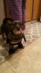 batdog fighting crime (TeamNovak) Tags: animal costume batdog