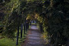 Floriade_251015_25 (Bellcaunion) Tags: park autumn fall nature zoetermeer rokkeveen florapark